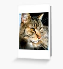 Sammy at HOME Greeting Card