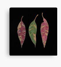 3 leaves on black Canvas Print