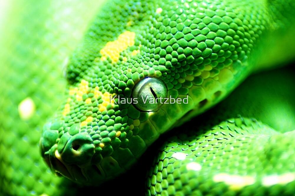 green snake watching eye by Klaus Vartzbed