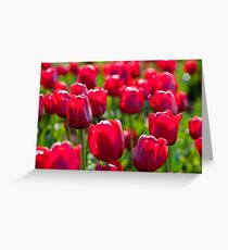Table Cape Tulip - Red Greeting Card