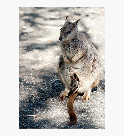 Peekaboo - Mareeba rock wallaby Photographic Print