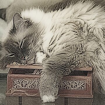 Another Sleeping Beauty by SusanHope