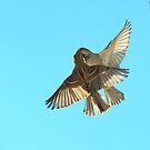 The Sparrow Waltz by larry flewers