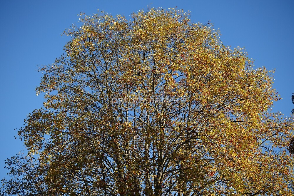 Early fall yellow tree top in blue sky. Nature picture. by naturematters