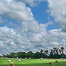 Cloudy Hay Field by © CK Caldwell IPA