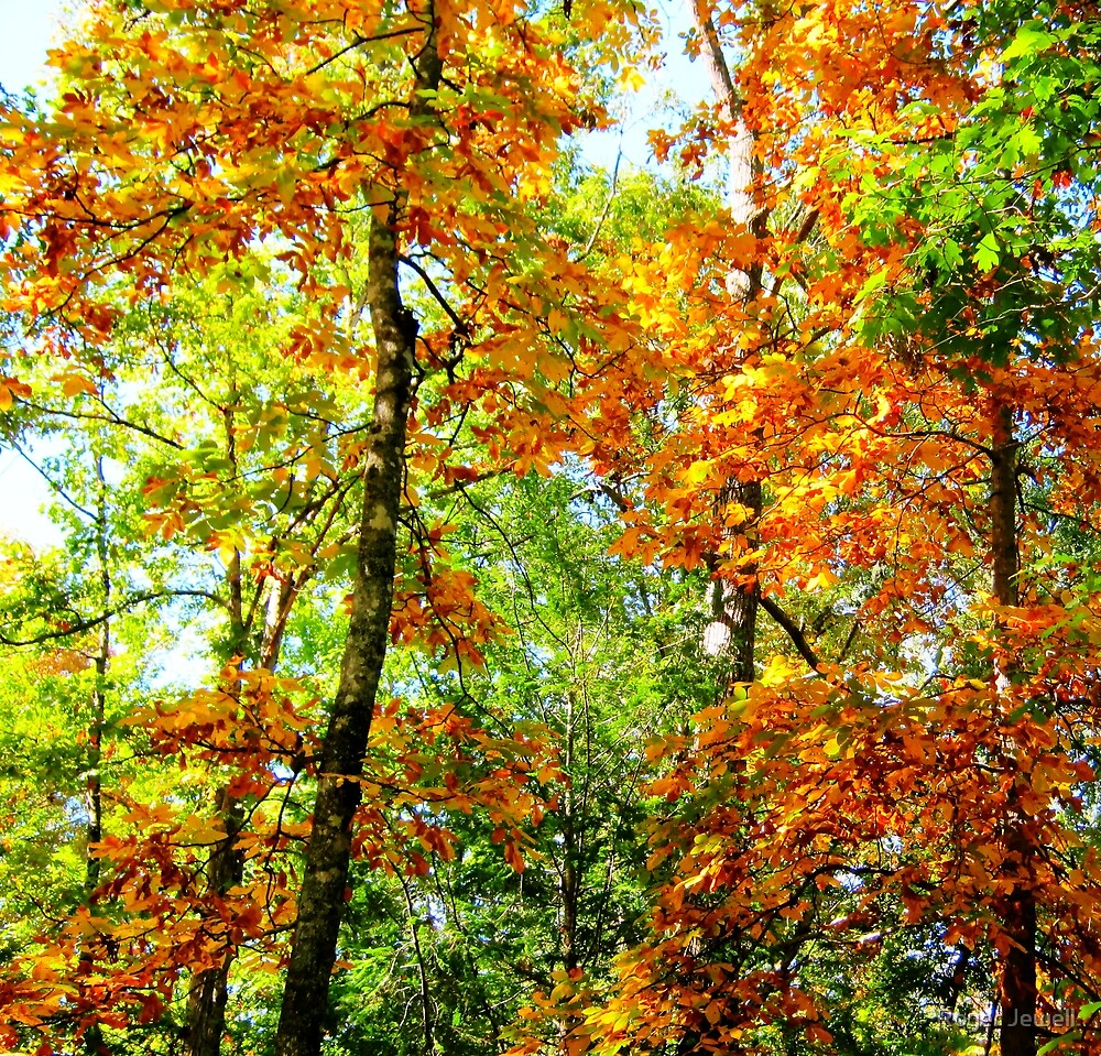 Front Yard Autumn by Roger Jewell