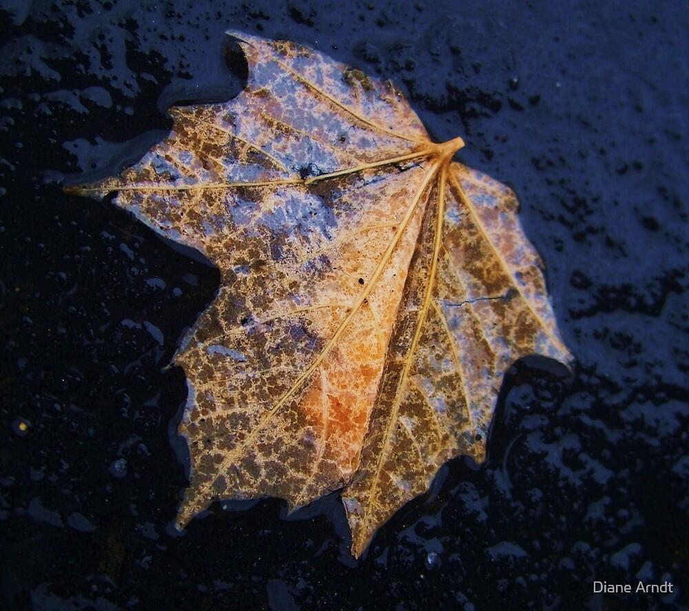 Soaked Leaf by Diane Arndt