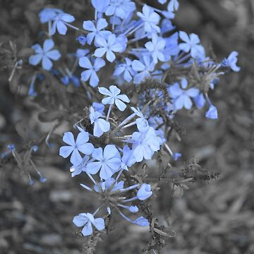 A Touch of Blue by SusanHope