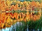 Beavers Bend Fall View 2 by Carolyn  Fletcher