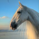 White Horse by TexTs