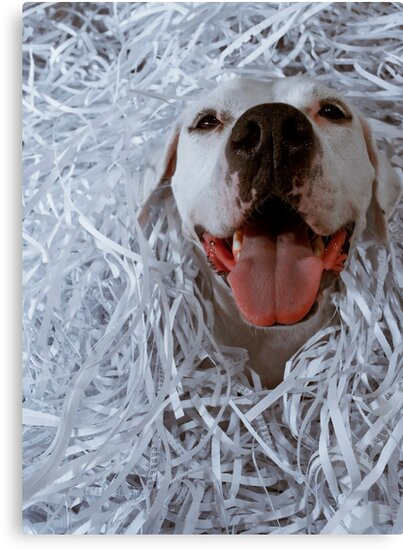 Dogs Love Paper by Jack Daniel Ciallella