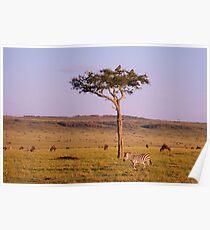 masai mara landscape Poster
