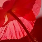 Red is Best by Lozzar Flowers & Art