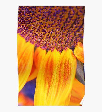 Sunflower III Poster