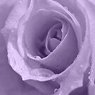 Purple Passion by Sea-Change