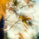 impressionist fall by Erin  Sadler