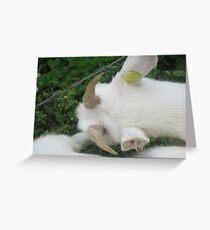 Hey look at my horns..still small....grrrrrrr... Greeting Card
