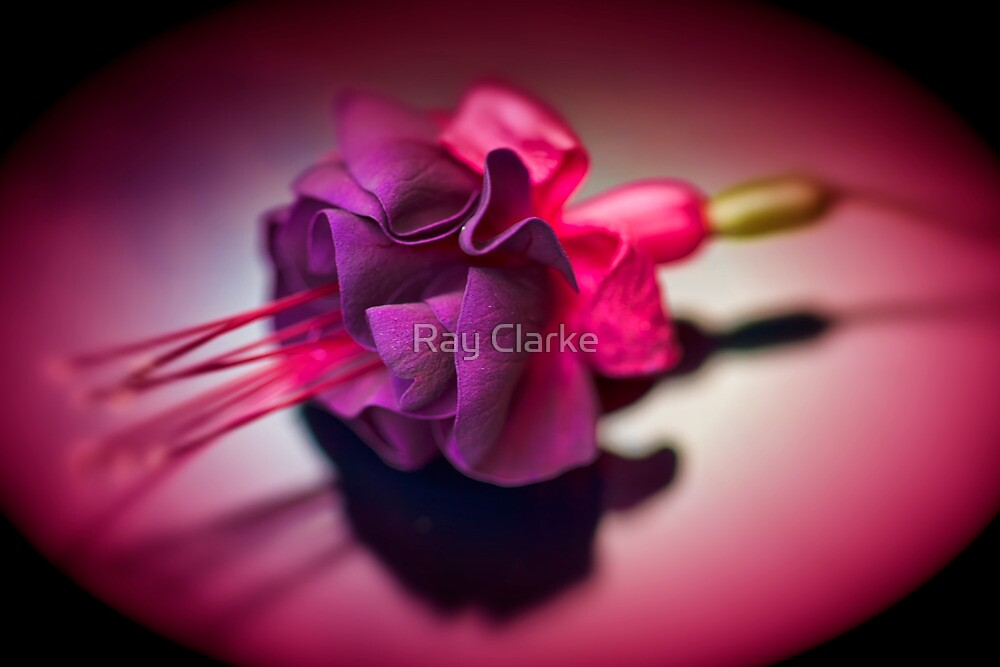 Dark Beauty by Ray Clarke