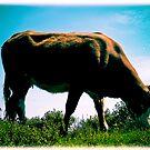 Cow by George Limitsios