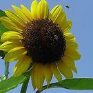 Sunflower and Bees by WildestArt