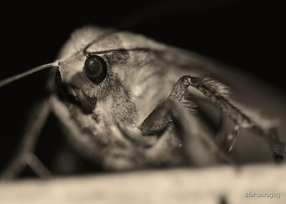 Moth by starwarsguy