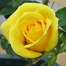 Serene Rose von BlueMoonRose