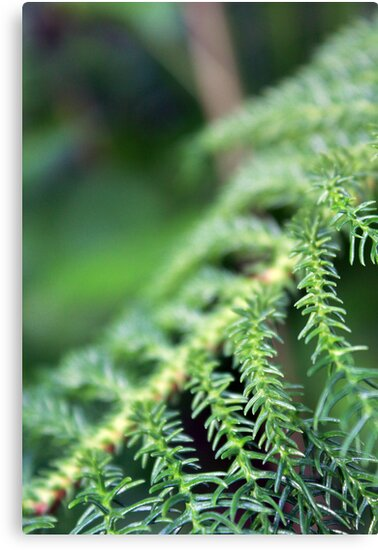 Greens by Faizan Qureshi