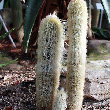 Cacti by faizan