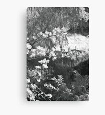 rio cuale Canvas Print