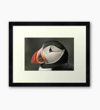 Puffin head Framed Print