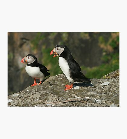 Puffin conversation Photographic Print