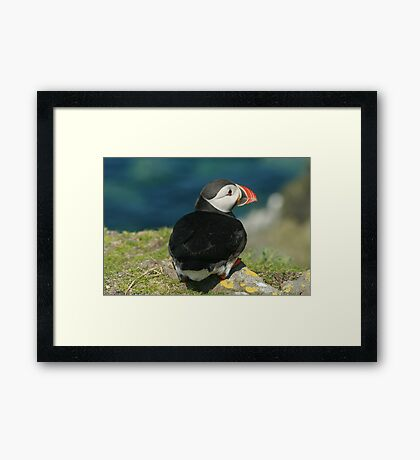 Watchful Puffin Framed Print