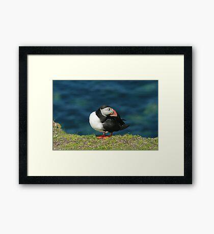 Posing puffin Framed Print