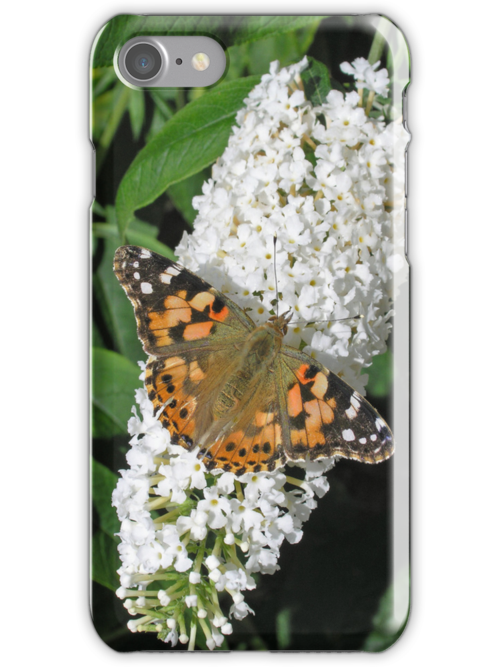 Painted Lady butterfly on white buddleia for iPhone by Philip Mitchell