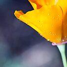 Sparkling Orange by Josie Eldred