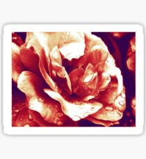 Red rose at the morning with water drops Sticker