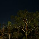 Gums at Night at Cobbold Gorge by Chris Cohen