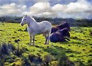 Dartmoor Ponies, Autumn 2011 by David Carton