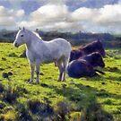 Dartmoor Ponies, Autumn 2011 by David Carton
