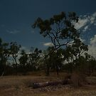 Cobbold Gorge Camp at Night by Chris Cohen