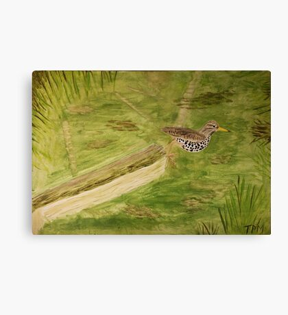 Spotted Sandpiper on the Kinnickinnic River Canvas Print