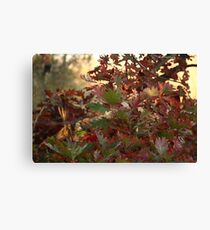 Red and Green Fall Leaves II Canvas Print