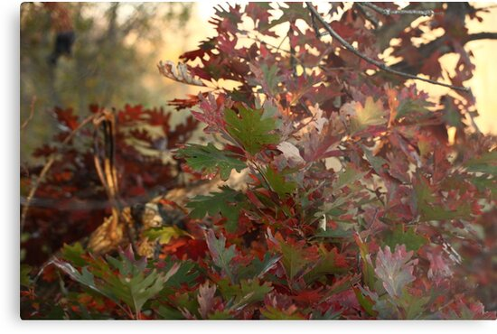 Red and Green Fall Leaves II by Thomas Murphy