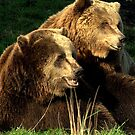 Bear pair by Alan Mattison