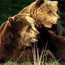 Bear pair by Alan Mattison