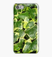 "Variegated ivy Hedera Helix ""Goldchild"" for iPhone iPhone Case/Skin"
