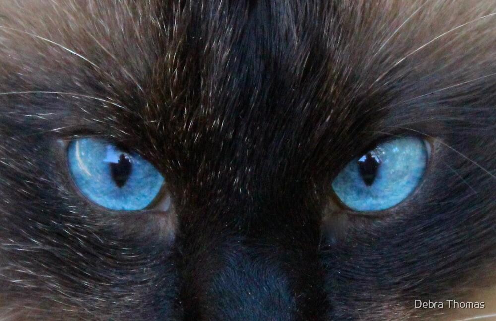 Maliboo...a blue eye'd cutie by Debra Thomas
