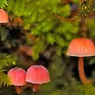 5 little moss mushrooms by the57man