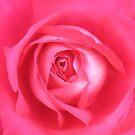 Mum's Rose by Michael John