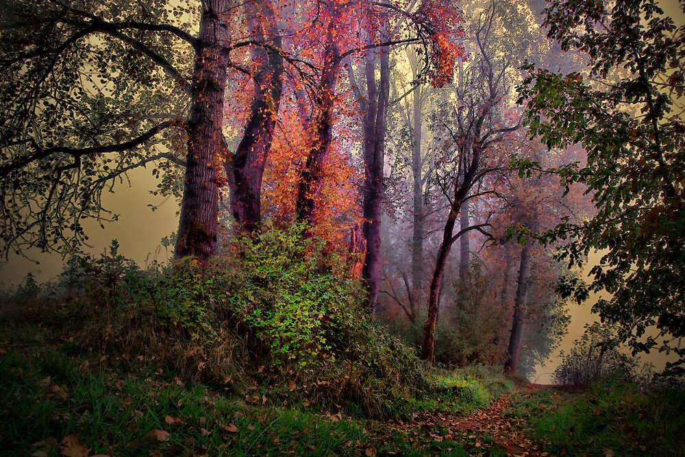 Early Fall Is Best by Charles & Patricia   Harkins ~ Picture Oregon